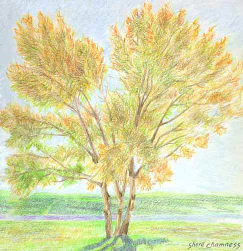 realart prismacolor colored pencil drawing sunshine tree by shere